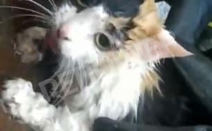 Спасенная в Кривом Роге кошка-высотница стала звездой YouTube
