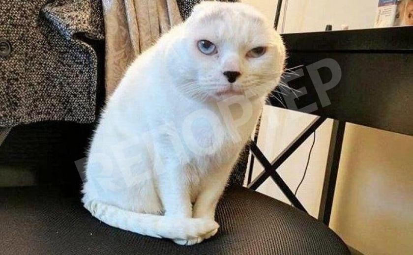 Криворожские кошки стали «мурками в законе»