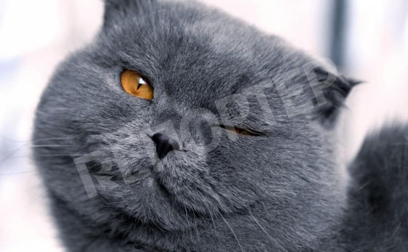 Криворожский кот решил поддержать всеукраинский «челлендж»