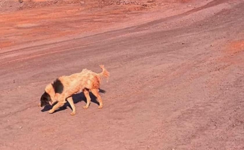 Красные собаки в Кривом Роге. Госэкоинспекция начала проверку «Рудомайн»