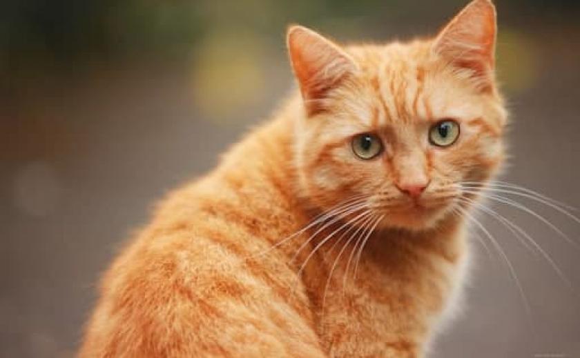 Кот сопротивлялся: в Кривом Роге юная живодерка поила животное алкоголем и снимала все на камеру