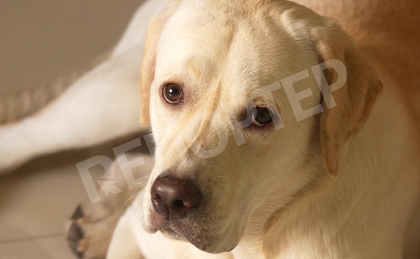 В Кривом Роге ради спасения собаки едва не снесли киоск