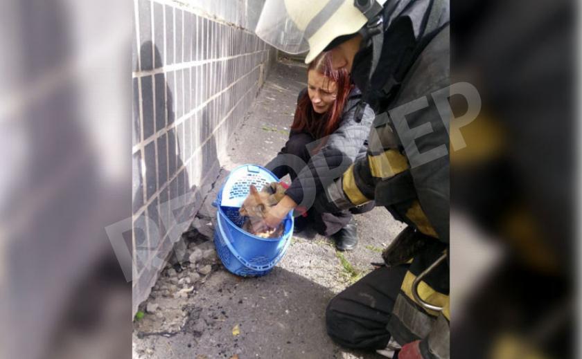 Загнанного котёнка доставали из западни четверо криворожских спасателей